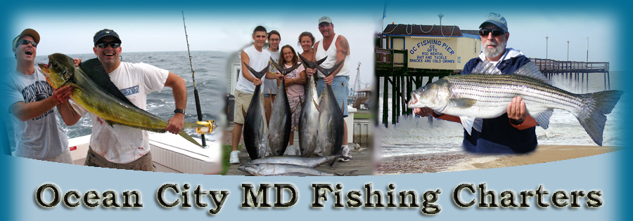 Ocean city maryland fishing articles for Md fishing charters